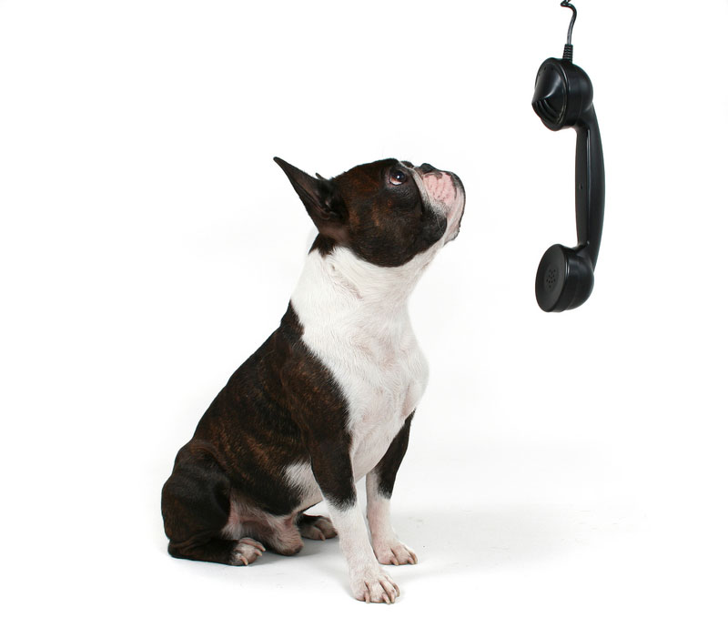 dog-on-phone